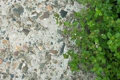 Hierba y fondo concreto de la textura del piso Fotografía de archivo