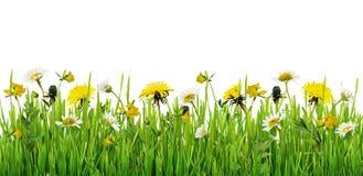 Hierba y frontera de las flores salvajes Imagen de archivo