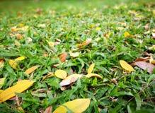 Hierba y hojas Imagen de archivo libre de regalías