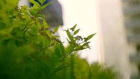 Hierba y hojas que se sacuden en el viento cierre Los elementos y la naturaleza almacen de metraje de vídeo