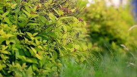 Hierba y hojas que se sacuden en el viento cierre Los elementos y la naturaleza almacen de video