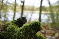 Hierba y lago Fotos de archivo libres de regalías