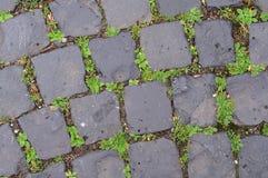 Hierba y mala hierba que crecen entre las piedras del adoquín Imagen de archivo libre de regalías