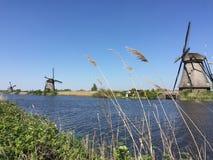 Hierba y molinoes de viento Fotos de archivo libres de regalías