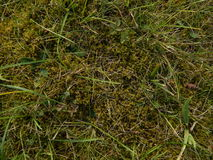 Hierba y musgo Foto de archivo libre de regalías
