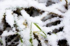 Hierba y nieve Foto de archivo