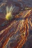 Hierba y piedra arenisca Patterrn Imagenes de archivo