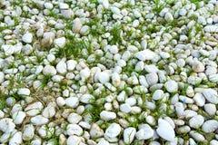 Hierba y piedras Foto de archivo
