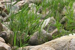 Hierba y piedras Fotos de archivo