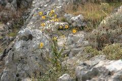 Hierba y plantas Imagen de archivo libre de regalías