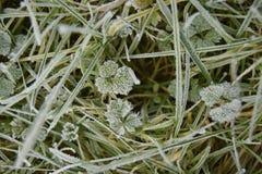 Hierba y plantas en la luz del sol escarchada fría de la mañana foto de archivo libre de regalías