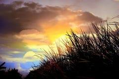 Hierba y puesta del sol Imagenes de archivo