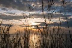 Hierba y puesta del sol en el mar Fotos de archivo libres de regalías