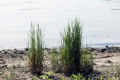 Hierba y río Fotos de archivo