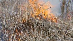Hierba y ramas ardiendo cercanas encima de la visión Fuego salvaje peligroso en la naturaleza almacen de metraje de vídeo