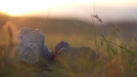 Hierba y rocas del campo en el primer de la puesta del sol almacen de metraje de vídeo