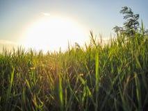 Hierba y sol Imagenes de archivo
