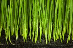 Hierba y suelo/fondo orgánico y de la agricultura Imagenes de archivo