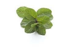 Hierbabuena verde fresca Fotos de archivo libres de regalías