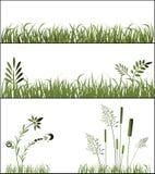 Hierbas stock de ilustración