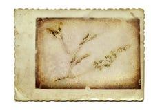 Hierbas imagen de archivo libre de regalías