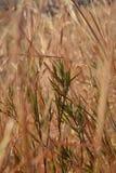 hierbas Imágenes de archivo libres de regalías