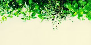 Hierbas aromáticas frescas verdes - toronjil, menta, tomillo, albahaca, perejil en el fondo blanco Marco del collage de la bander imagen de archivo libre de regalías