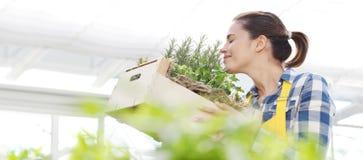 Hierbas aromáticas sonrientes de la especia del olor de la mujer en el fondo blanco, jardín de la primavera foto de archivo