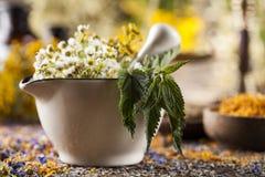 Hierbas, bayas y flores con el mortero, en backgrou de madera de la tabla Fotos de archivo libres de regalías
