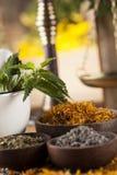 Hierbas, bayas y flores con el mortero, en backgrou de madera de la tabla Imágenes de archivo libres de regalías