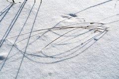 Hierbas congeladas en nieve foto de archivo