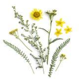 Hierbas curativas Ramo de las plantas medicinales y de las flores de ajenjo, helenio, milenrama, tansy, hierba de San Juan imagenes de archivo