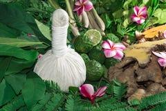 Hierbas de Ayurveda que curan propiedades de la fauna Imagen de archivo