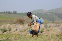 Hierbas de la cosecha de la mujer del pueblo en campo Fotos de archivo libres de regalías