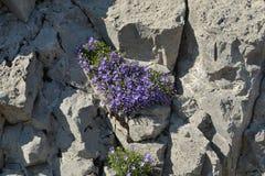 hierbas de la montaña Imagen de archivo libre de regalías