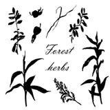 Hierbas del bosque fijadas del ejemplo a mano Imagen de archivo libre de regalías
