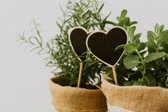 Hierbas del jardín en los potes de la arpillera fotografía de archivo