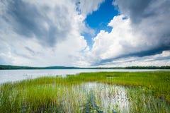 Hierbas en el lago Massabesic, en castaño, New Hampshire Imagenes de archivo