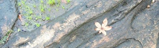 Hierbas en fase de piedra mojada Fotos de archivo libres de regalías
