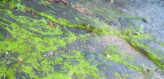 Hierbas en fase de piedra mojada Fotografía de archivo