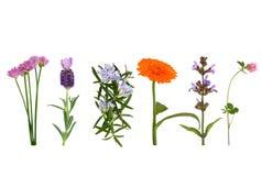 Hierbas en flor Foto de archivo libre de regalías