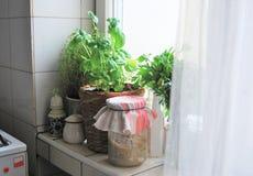 Hierbas en la cocina foto de archivo libre de regalías