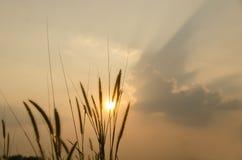 Hierbas en la puesta del sol Imagen de archivo