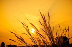 Hierbas en la puesta del sol Foto de archivo libre de regalías