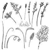 Hierbas florales de la pizca del ejemplo del vector ilustración del vector