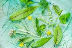 Hierbas frescas Foto de archivo libre de regalías