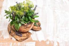 Hierbas frescas eneldo, tomillo, sabio, lavanda, menta, albahaca FO sanas Fotos de archivo
