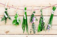 Hierbas frescas que cuelgan de clavijas Fotos de archivo