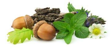 Hierbas medicinales Foto de archivo libre de regalías