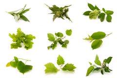 Hierbas medicinales Imagen de archivo libre de regalías